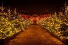 allée sapins lumières jardins Noël